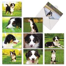 The Best Card Company - 10 Adorable Blank Dog Cards (4 x 5.12 Inch) - Pet Dog Breed Assortment, Boxed - Awesome Australian Shepherds AM6830OCB-B1x10