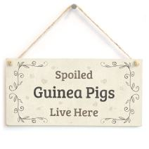 """Meijiafei Spoiled Guinea Pigs Live Here - Gift Sign for Guinea Pig Owners 10""""x5"""""""