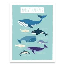 """Nautical Whales & Dolphins Nursery Decor- 11x14"""" Professional Grade Print (Blue Whale, Narwhal, Sperm, Beluga, Killer, Humpback, Common, Bottlenose Dolphin) Beautiful Picture for Bedroom or Classroom"""