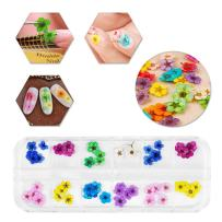 12 Colors Nail Dried Flowers 3D Flowers for Nails, Natural Real Dry Flowers, Flower Nail Design Flower Nail Decals Dried Flowers Nail Art, 60 Pc Lovely Five Petal Flowers Manicure Nail Art Stickers
