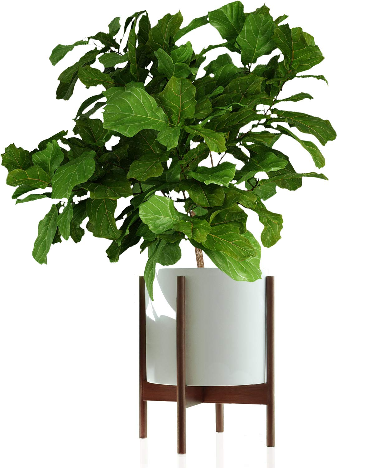 """Fox & Fern Mid-Century Modern Plant Stand - EXCLUDING White Ceramic Planter Pot (Fits 12"""" Pot, Acacia Wood)"""