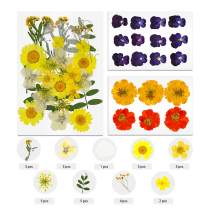 TAEERY 51 PCS Real Dried Pressed Flowers Leaves Petals for Crafts - Colorful Pressed Flowers Daisies for DIY Candle Resin Jewelry Nail Pendant Crafts Making Art Floral Decors