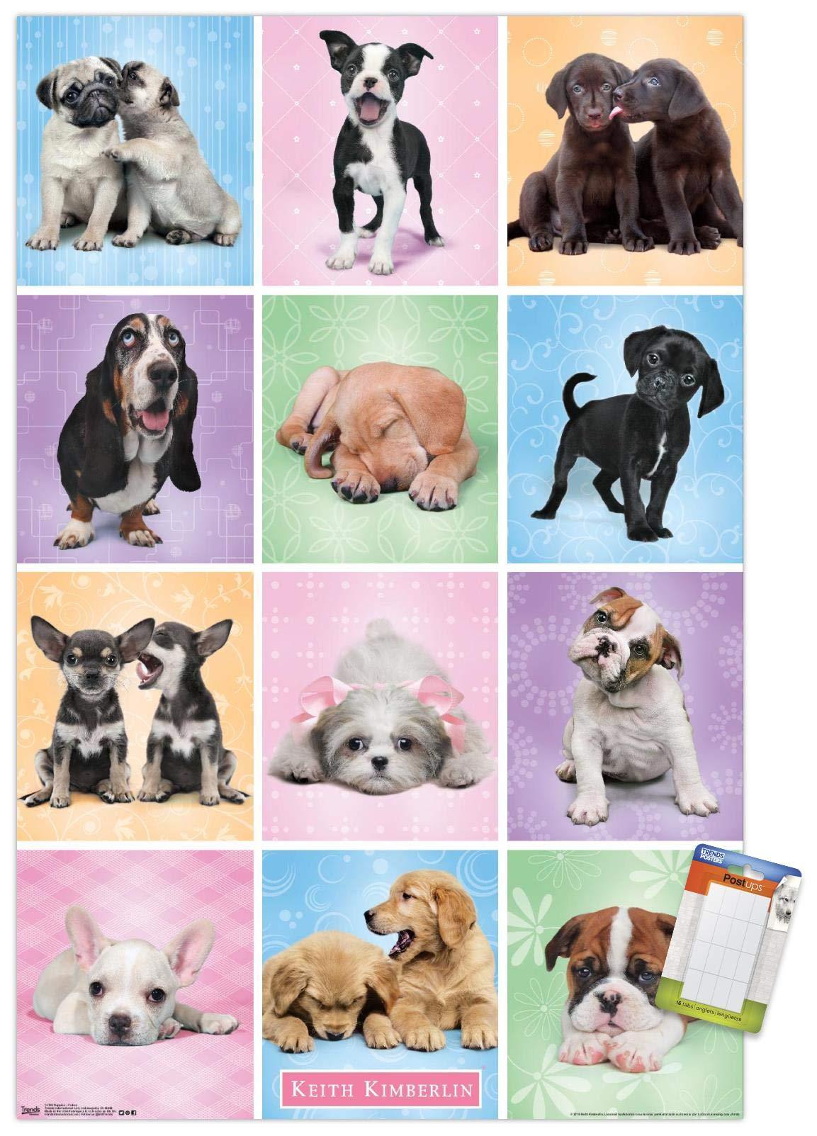 "Trends International Poster Mount Keith Kimberlin - Puppies - Cuties Grid, 14.725"" x 22.375"", Premium Poster & Mount Bundle"