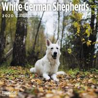 2020 White German Shepherds Wall Calendar by Bright Day, 16 Month 12 x 12 Inch, Cute Dogs Puppy Animals Police Alsatian Search Recue Canine
