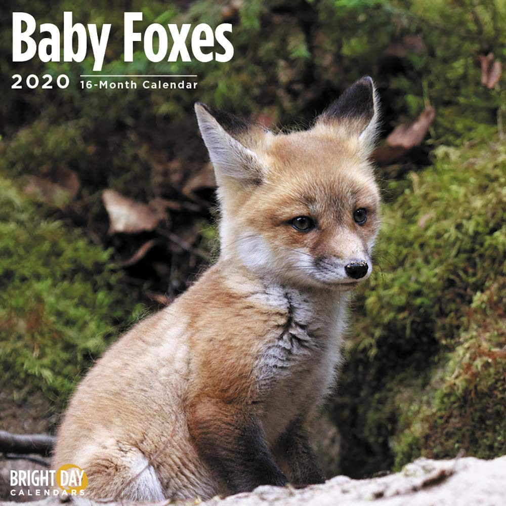 2020 Baby Foxes Wall Calendar by Bright Day, 16 Month 12 x 12 Inch, Cute Critter Animals