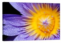 LightFairy Glow in The Dark Canvas Painting - Stretched and Framed Giclee Wall Art Print - Purple and Yellow Flower - Master Bedroom Living Room Decor - 6 Hours Glow - 46 x 32 inch