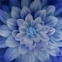 Hoffman Fabrics Digital Dream Big 44'' Floral Panel Hydrangea