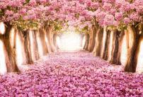 AOFOTO 6x4ft Spring Cherry Blossom Backdrop Sweet Sakura Flower Tree Photography Background Floral Petal Boulevard Photo Studio Props Kid Baby Children Infant Newborn Artistic Portrait Vinyl Wallpaper