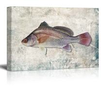 wall26 - Multicolor Freshwater Drum Fish Illustrated on a Textured Background - Canvas Art Home Decor - 32x48 inches