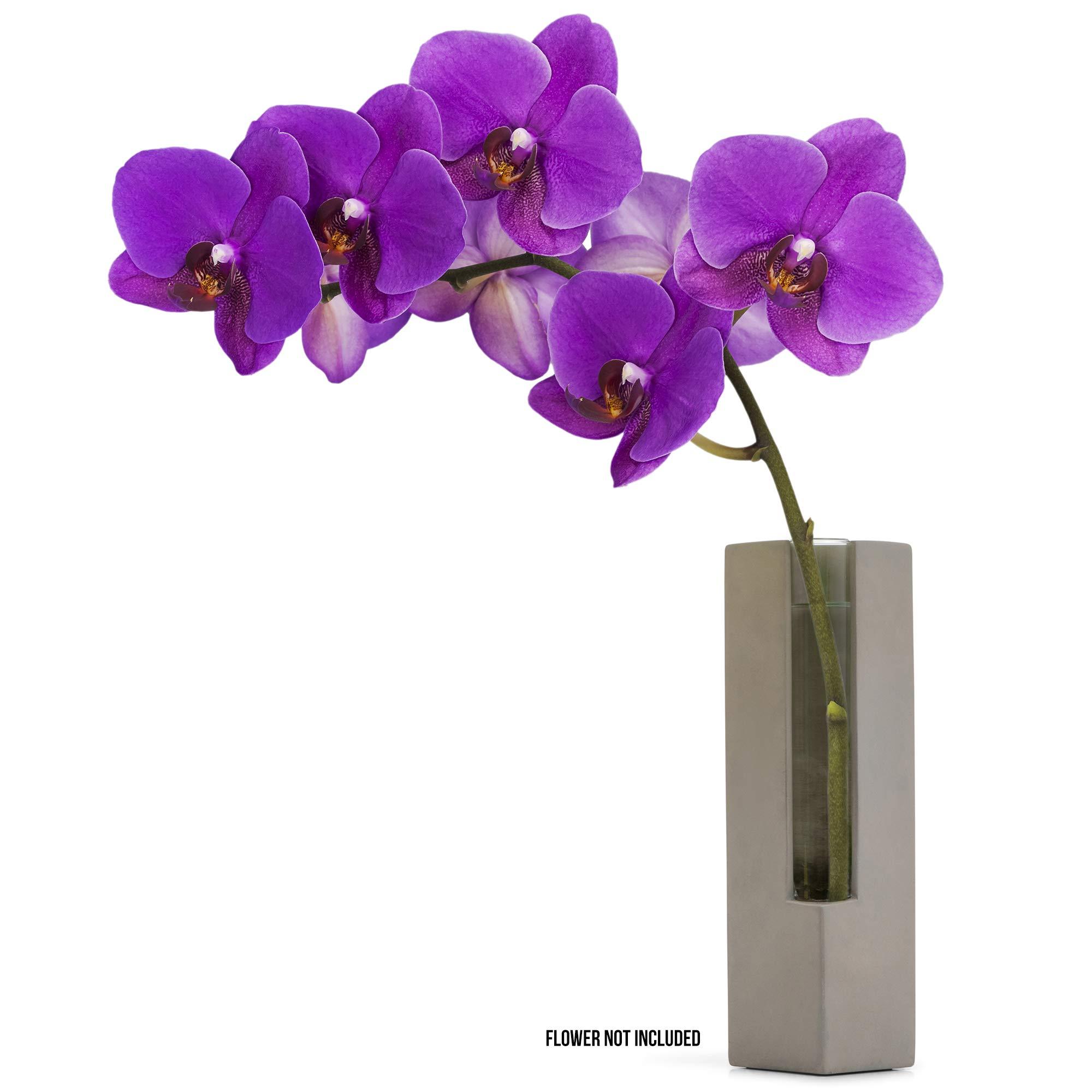 "Casadorna Modern Flower Vase Glass Tube with Polished Concrete - Orchid Bud Vase Glass Tube Flower Vase | Decorative Centerpiece for Table Wedding Hotel Office Home Decor Floral Display | 8"" H"