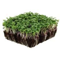Basic Salad Mix Microgreens Seeds | Non-GMO Micro Green Seed Blend | Broccoli, Kale, Kohlrabi, Cabbage, Arugula, & More (5 Pounds)