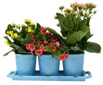 ARAD Ceramic Planters for House Plants-Plant Pots Set for Indoor & Outdoor Use (Rustic Aqua)