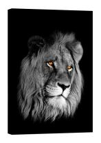 LightFairy Glow in The Dark Canvas Painting - Stretched and Framed Giclee Wall Art Print - Lion Head - Master Bedroom Living Room Decor - 6 Hours Glow - 32 x 46 inch