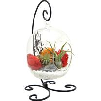 """Bliss Gardens Air Plant Terrarium Kit with 6"""" Oval Glass with Geode Crystal - Sunburst On Ice - Small Black Metal Stand Included"""