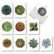 The Best Card Company - 20 Assorted Blank Plant Cards Boxed (4 x 5.12 Inch) (10 Designs, 2 Each) - Luscious Succulents AM6287OCB-B2x10