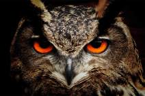 Owl Face 5D Diamond Painting Full Drill by LUHSICE, 45x65cm