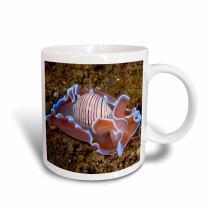 "3dRose mug_73237_2""Indonesia, Pantar Island, mollusk, marine life-AS11 BJA0098 - Janyes Gallery"" Ceramic Mug, 15 oz, Multicolor"