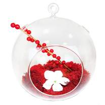 """CYS EXCEL 8"""" Hanging Glass Orb Terrarium (Pack of 1) 
