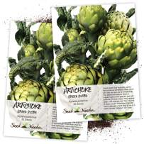 Seed Needs, Green Globe Artichoke (Cynaria scolymus) Twin Pack of 30 Seeds Each Non-GMO