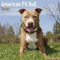 American Pit Bull Terrier Calendar 2020 - Dog Breed Calendar - Wall Calendar 2019-2020