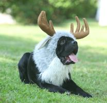 Onmygogo Funny Pet Reindeer Moose Costumes for Dog, Cute Furry Pet Wig for Halloween Christmas, Pet Clothing Accessories