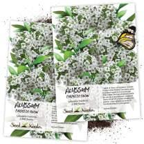 Seed Needs, Carpet of Snow Alyssum (Lobularia maritima) Twin Pack of 3,500 Seeds Each