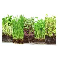 """Microgreen Assortment 5 Pack Refill – Pre-Measured Soil + Seed, USE with Window Garden Multi-Use 15"""" x 6"""" Planter Tray (NOT Included). Zesty Radish, Sunflowers, Pea Shoots, Wheat Grass and Salad Mix."""
