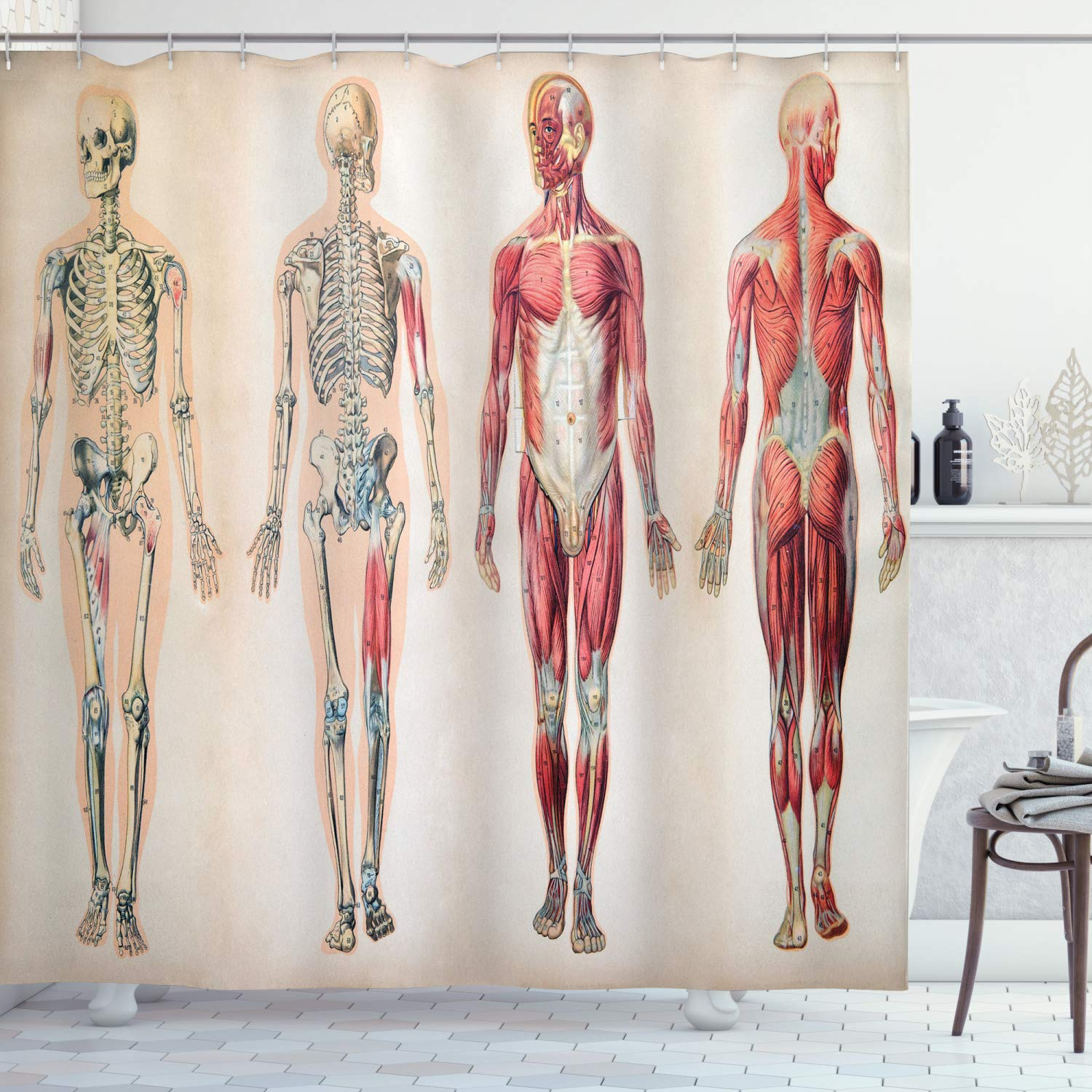 """Ambesonne Human Anatomy Shower Curtain, Vintage Chart of Body Front Back Skeleton and Muscle System Bone Mass Graphic, Cloth Fabric Bathroom Decor Set with Hooks, 84"""" Long Extra, Ruby Cream"""