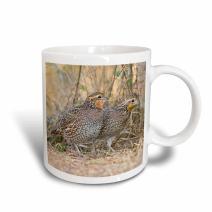 3dRose 146840_1 Northern Bobwhite quail bird emerging from cover Mug, 11 oz, Ceramic