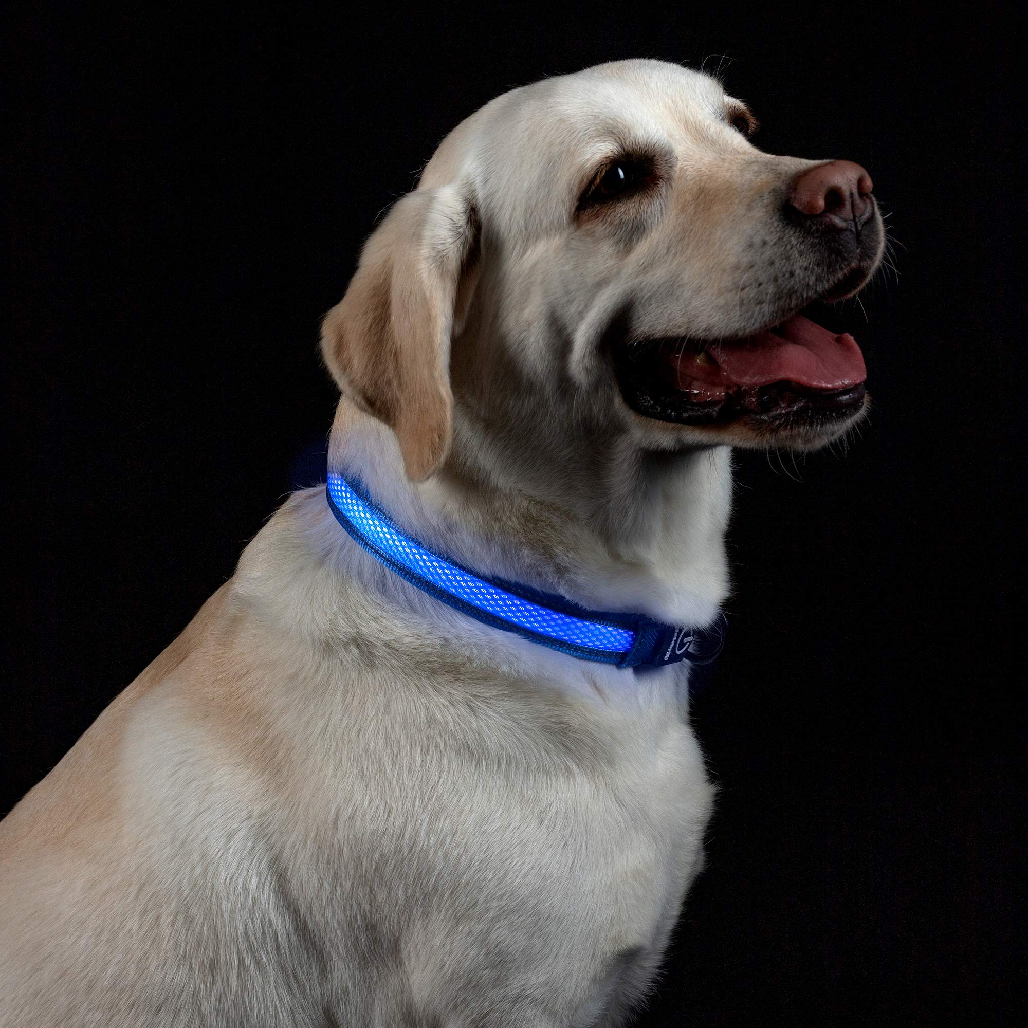 MATCHY2U LED Dog Collar - USB Rechargeable Reflective Light Up Collars for Small Medium Large Dogs