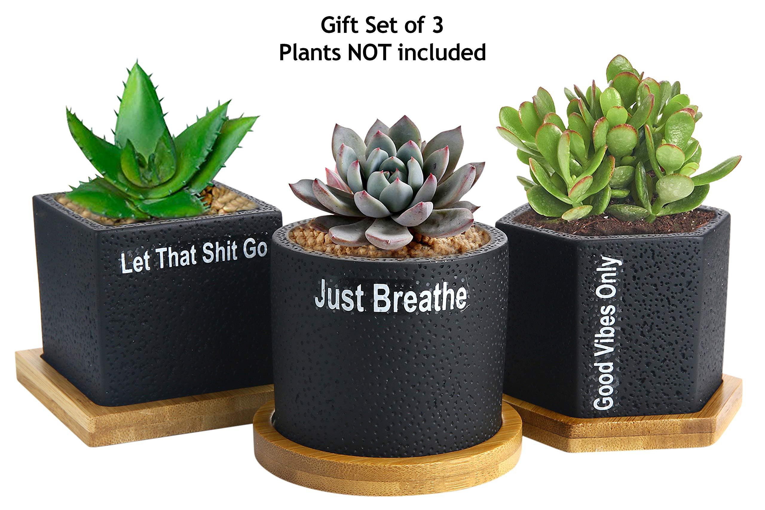 Succulent Pots Planter Cactus Pot - 2.75 inch Succulent Planters Black Concrete for Succulents Herbs Mini Flowers Plants Drainage Bamboo Tray Set of 3 Great Self Care Gift to Be Zen