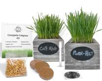 Organic Cat Grass Seeds Kit - Organic Seed & Soil for 3 Growing's. 2 x Rustic Wood Organic Wheatgrass Seeds Planters - Hairball Remedy for Cats & Wheatgrass Growing Kit (Sea Foam (2 Planters))