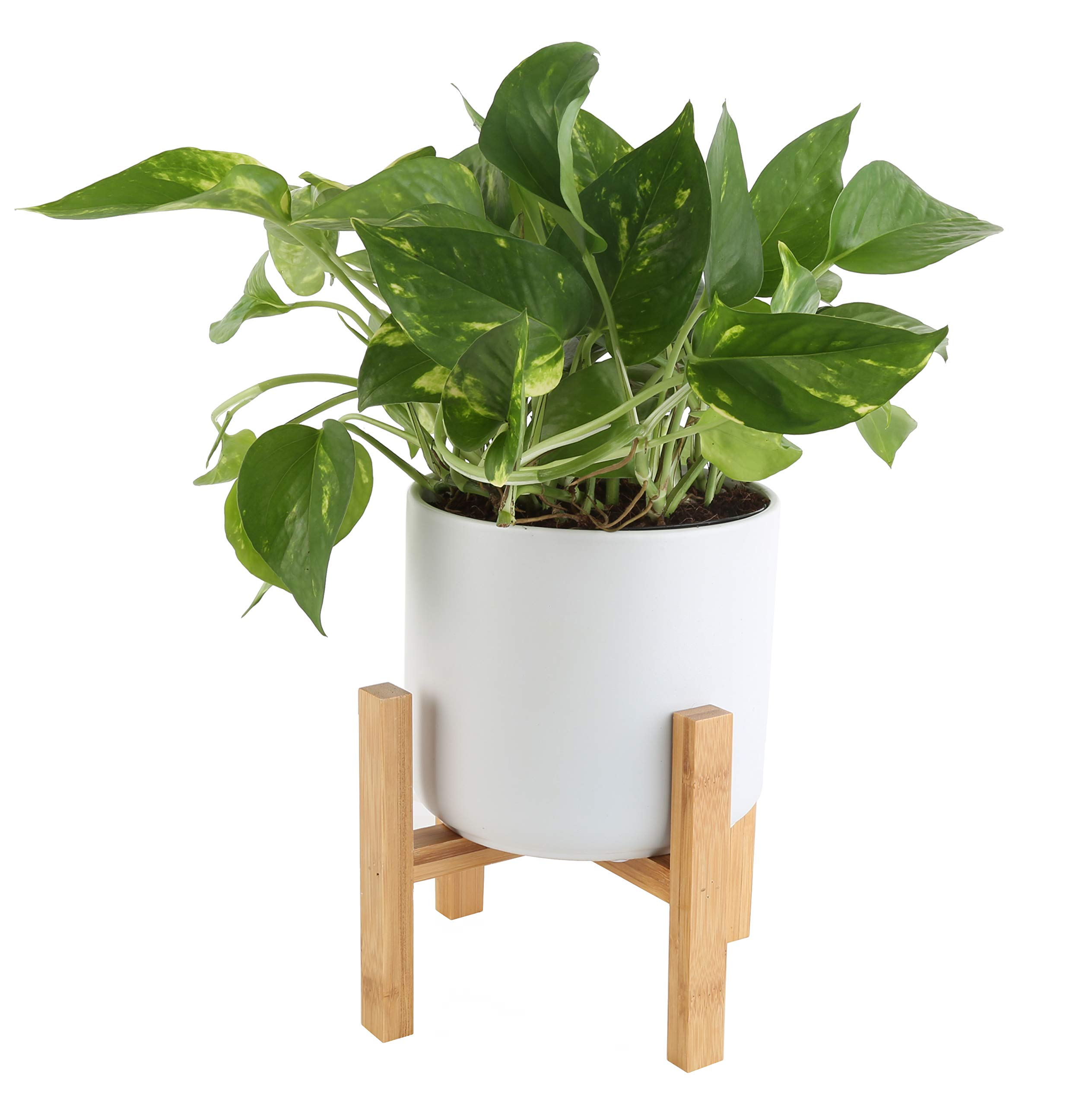 Costa Farms Devil's Ivy, Golden Pothos with 4.25-Inch Wide Mid-Century Modern Planter and Plant Stand Set, White, Fits on Shelves, Tabletops, Counters