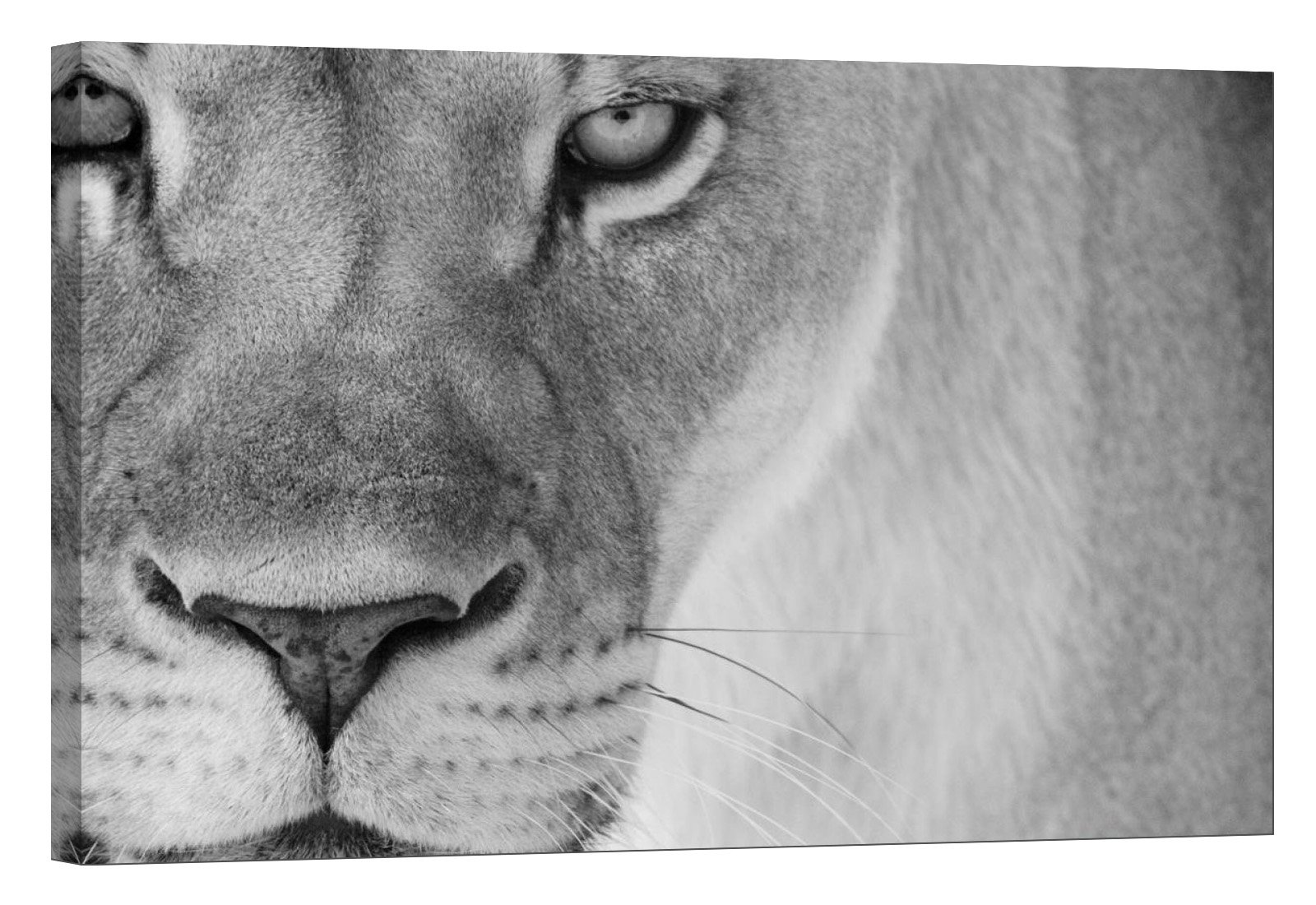 LightFairy Glow in The Dark Canvas Painting - Stretched and Framed Giclee Wall Art Print - Lion Tiger Leopard Lioness - Master Bedroom Living Room Decor - 6 Hours Glow - 24 x 16 inch