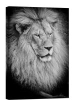 LightFairy Glow in The Dark Canvas Painting - Stretched and Framed Giclee Wall Art Print - Animals Nature The Lion King - Master Bedroom Living Room Decor - 6 Hours Glow - 16 x 24 inch