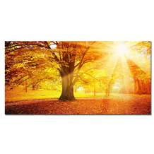 Canvas Wall Art Tree Picture - Large Sunshine Nature Fall landscape Giclee Print for Home Decoration Stretched and Framed with Wooden / Easy to Hang / Wall Decor for Living Room 20x40 inch Painting