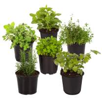 "The Three Company Live 3.5"" Herbs (Lemon Balm, Rosemary, Oregano, Lavender, Mint, Thyme, Basil, Parsley), 6 Per Pack (Grower's Assortment)"