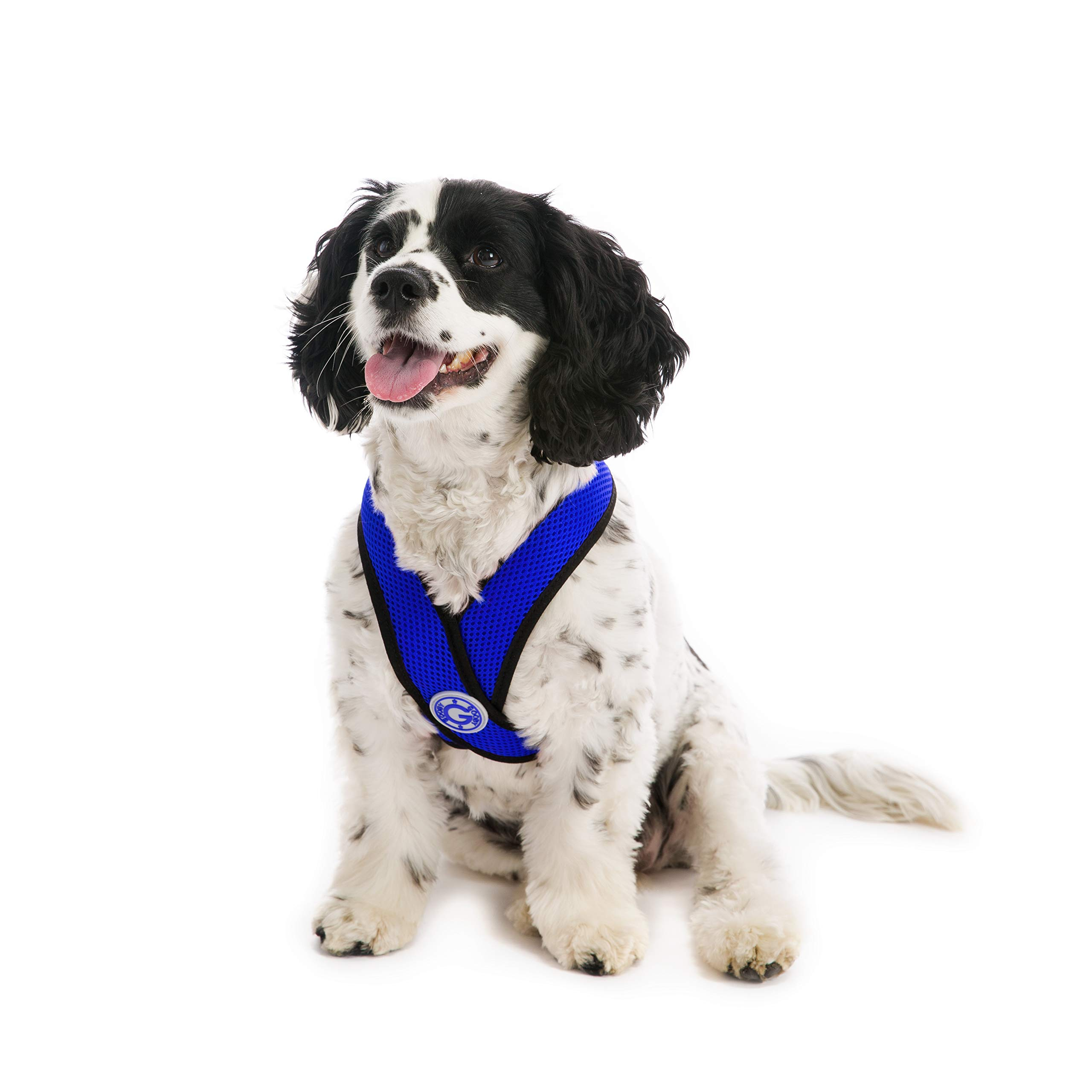 Gooby - Comfort X Head-in Harness, Small Dog Harness with Patented Choke Free X Frame