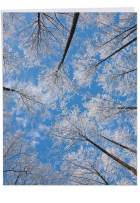 Merry Christmas Card 'snow Tops Christmas' with Envelope (Supersized 8.5 x 11 Inch) - Majestic Snow-Dotted Treetops on A Bright Blue Sky- Stationery Xmas Greeting Card J9632IXTG