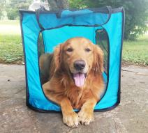 Bark Brite Pop Open Collapsible Travel Crate in 2 Sizes