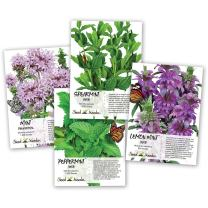 Seed Needs, Non-GMO Mint Seed Collection (Includes 3,500 Seeds Collectively) Spearmint, Pennyroyal Mint, Peppermint & Lemon Mint