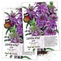 Seed Needs, Lemon Mint (Mentha pulegium) Twin Pack of 500 Seeds Each Non-GMO