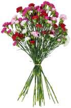 Benchmark Bouquets 20 stem Rainbow Mini Carnations, No Vase (Fresh Cut Flowers)