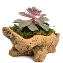 Natural Elements Stump Planter (Squatty) – Realistic Woodland-Themed with Intricate Weathered bark Detail. Grow Succulents, Cactus, African Violets. Striking in Any décor.
