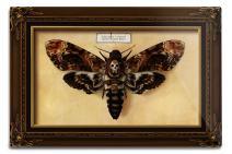 Lantern Press Death's Head Moth (12x18 Aluminum Wall Sign, Wall Decor Ready to Hang)