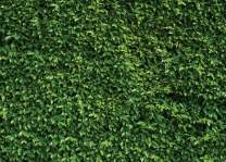 SJOLOON 7X5ft Green Leaves Backdrop Brunch Backdrop Natural Green Lawn Party Photography Backdrop Birthday Newborn Baby Lover Wedding Photo Studio Props 10923