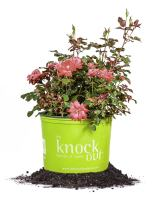 Perfect Plants Double Red Knock Out Rose Live Plant, 3 Gallon, Includes Care Guide