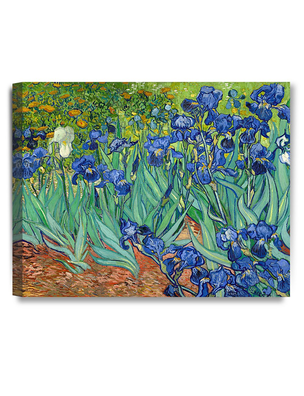 DECORARTS - Irises in The Garden, Vincent Van Gogh Art Reproduction. Giclee Canvas Prints Wall Art for Home Decor 20x16