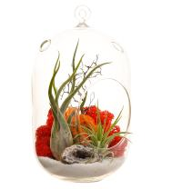"Bliss Gardens Air Plant Terrarium Kit With / 8"" Oval Glass/Geode Crystal/Sunburst On Ice /"