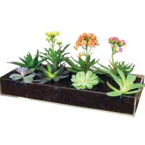 Window Garden Multi-Use Acrylic Planter Tray + Fiber Soil + Sprayer = Gorgeous Succulent, Dish and Herb Gardens | Grow Microgreens, Wheatgrass Seed | Table Centerpiece | Drip Tray | Fairy Gardens.